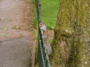 Squirrel in Hyde Park
